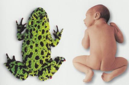 Лягушка новорожденному фото